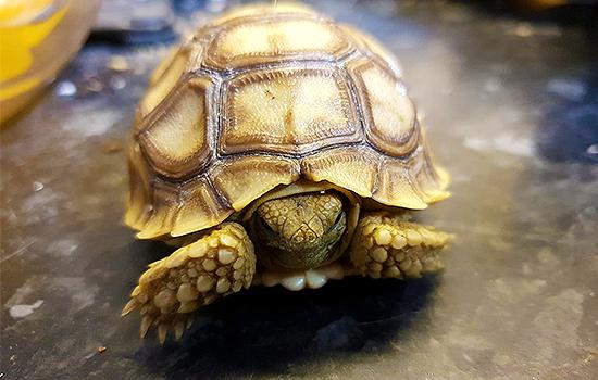 Large Reptile Store Exotic Pets Pet Shop London