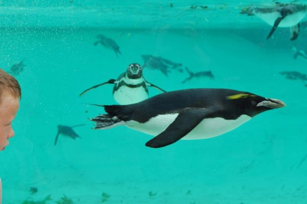 Days Out London Zoo Animals Penguins Family Days Out Things To Do In London